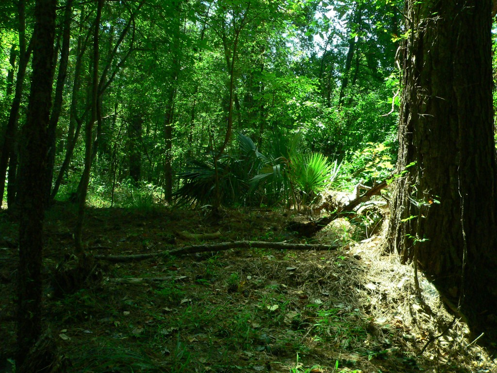 A section of forest with a large tree on the right of the frame.