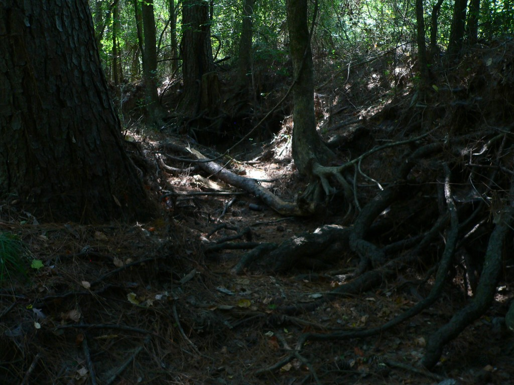 The bottom of a creek bed with gnarled tree roots and a shaft of light in the background.